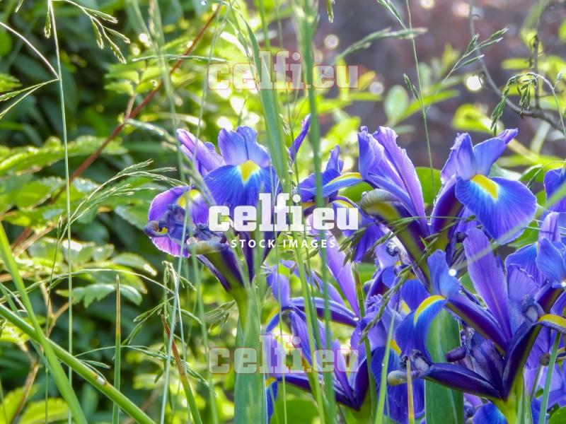 Stock-1-0021 | Plants | Malchows Company