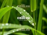 Stock-1-0013 | Pflanzen | Malchows Company