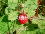 Stock-1-0015 | Plants | Malchows Company