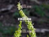 Stock-1-0028 | Plants | Malchows Company
