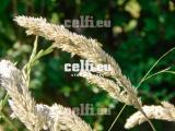 Stock-1-0032 | Plants | Malchows Company
